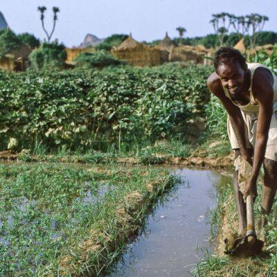 Arbeit am Bewässerungsgraben – Sudan, Kassala – Mai 1984