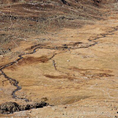 Braune Farbvielfalt – Val Languard – 7. Oktober 2007
