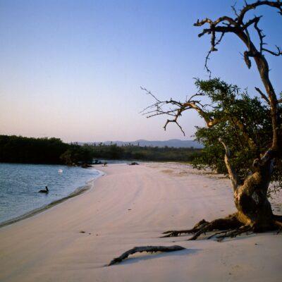 Echt einsamer Sandstrand an der Tortuga Bay – Galapagos, Insel Santa Cruz – Februar 1985