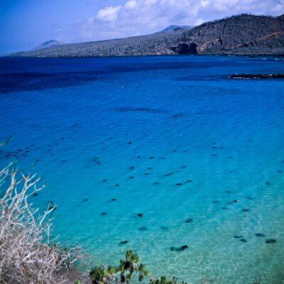 Hundert Meeresschildkröten auf einem Blick – Galapagos, Insel Floreana – Februar 1985